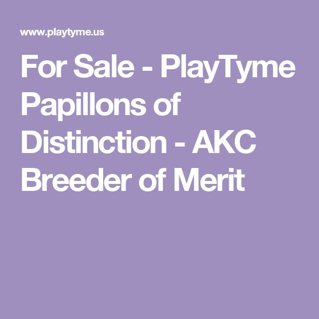 For Sale - PlayTyme Papillons of Distinction - AKC Breeder of Merit