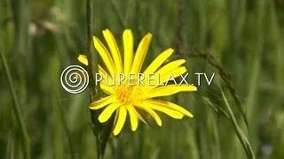 PureRelax.TV - YouTube
