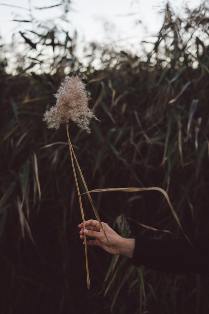 Inspired by nature by Babes in Boyland