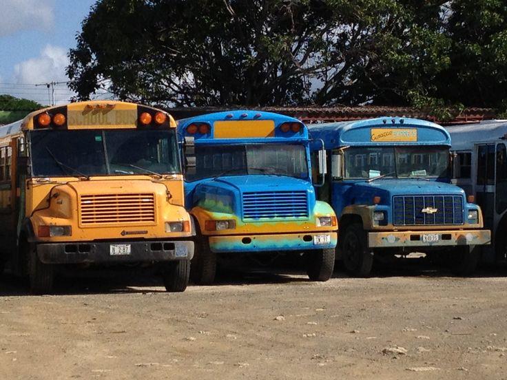 De schoolbussen.