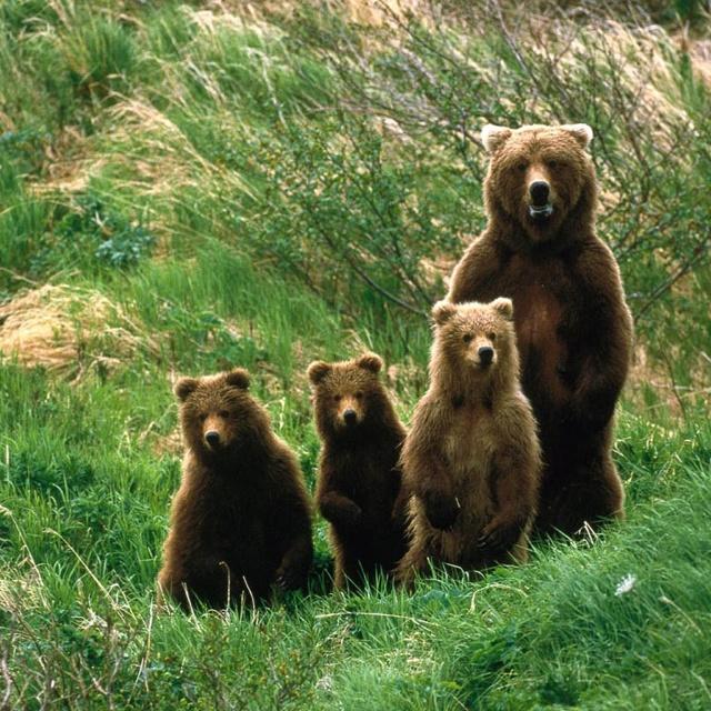 Pics Bear Dating Mauling Funny Amateur
