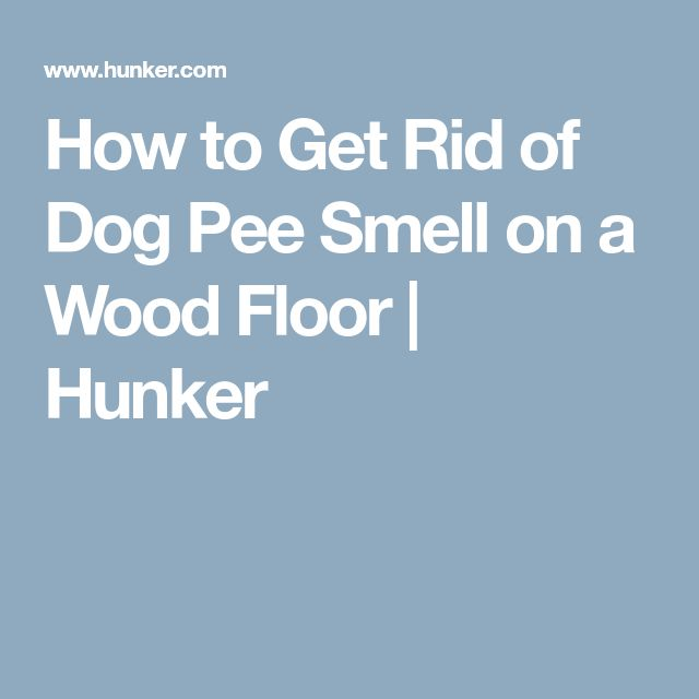 How to Get Rid of Dog Pee Smell on a Wood Floor   Hunker