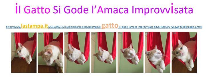 Il gatto si gode l'amaca improvvisata http://www.lastampa.it/2016/09/17/multimedia/societa/lazampa/il-gatto-si-gode-lamaca-improvvisata-Xkv6HM5SwVYykpygFfBXdK/pagina.html