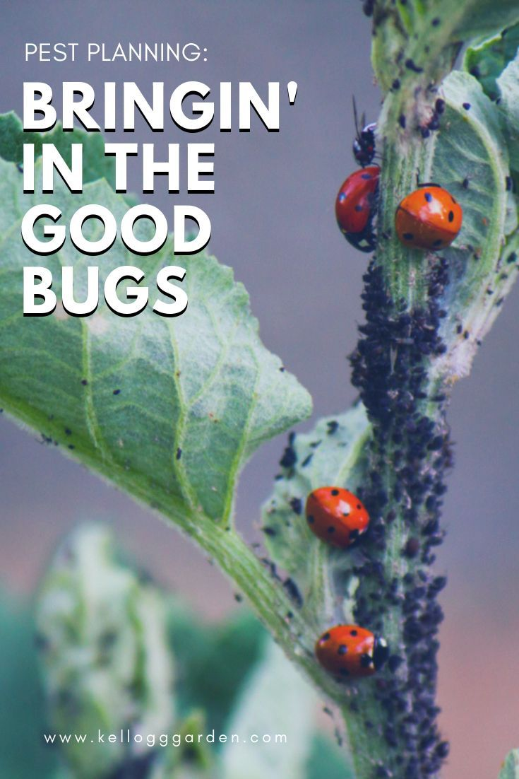 BRING IN THE GOOD BUGS