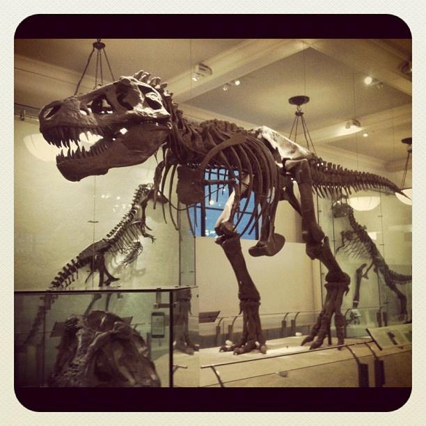 Natural History Museum Digging Into Dinosaurs