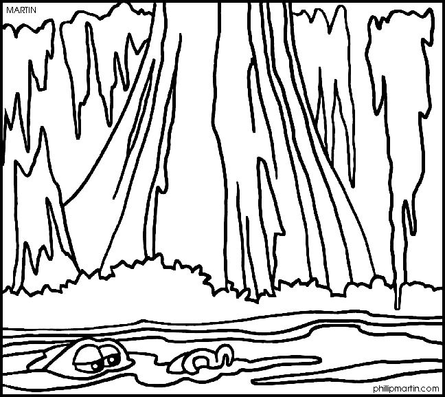 Bald cypress coloring pages ~ 21 best Mangroves & Coastal Ecosystems images on Pinterest ...