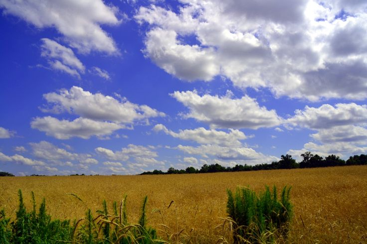 Wheat Field Digital Photo - Computer Background - Wallpaper - Nature Photography - Instant Download - Clouds by NatureIsBeautiful on Etsy
