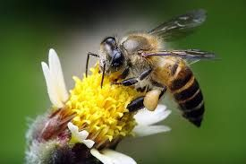 Image result for when the bee stings
