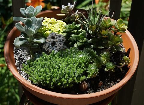 With their versatility, resilience, and timeless look, succulents are becoming an increasingly popular plant for both indoor accents and outdoor gardening. Succulents can be planted in individual pots for unique placement throughout your...