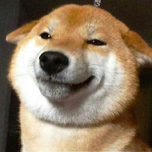 blogefordoges:  doge y r u so pleesd did u just eet a treate