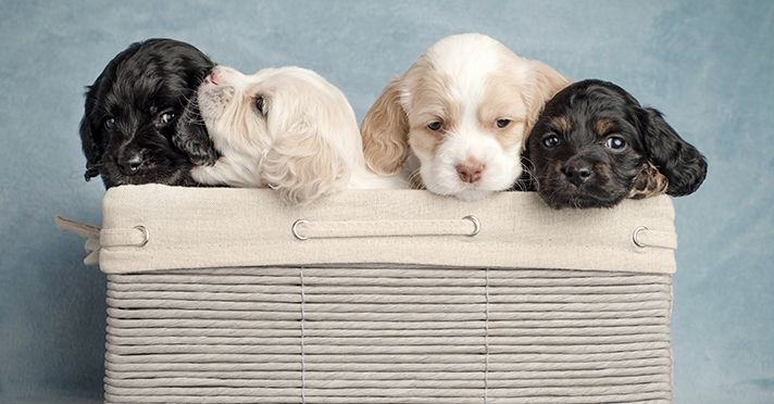 The Indiana Department of Revenue recently ruled that a woman owed sales tax for selling dogs and puppies.  ...