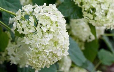 Zomerklussen in de tuin - bewatering plantenborder en hagen scheren in de zomer