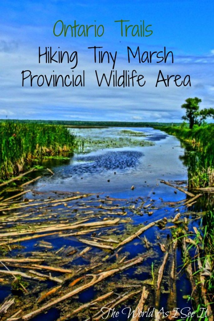 Ontario Trails: Hiking Tiny Marsh Provincial Wildlife Area
