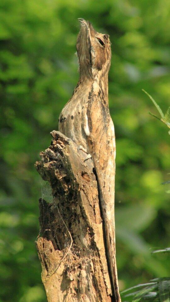 Camuflagem de um pássaro