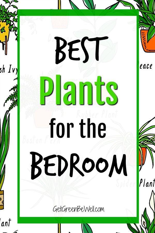 Best Bedroom Plants For Better Sleep Bedroom Plants Best Plants For Bedroom Perfect Plants