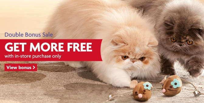 Our persian babies showing off their mice catching skills in the current Petsmart campaign!  Their photo is in all stores and on Petsmart.com