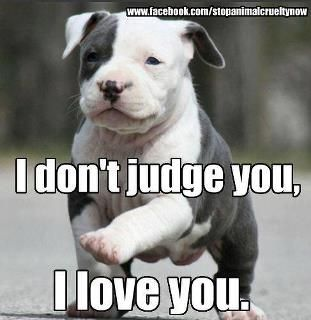 Pit Bulls dont judge, they love.