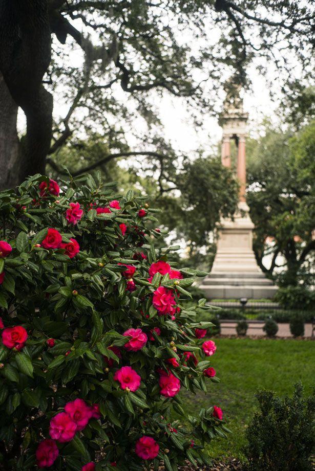 Savannah's squares