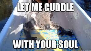 Image result for koala memes