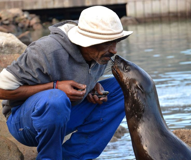 Try some seal feeding in Hout Bay in Cape Town?
