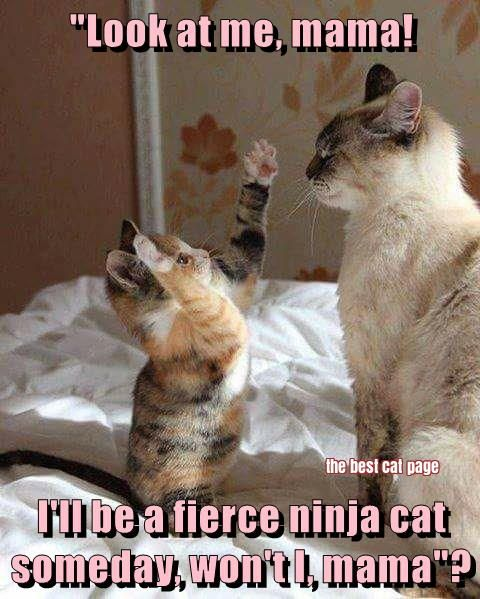 529 best cats images on pinterest funny animals cats humor and fierce sciox Image collections