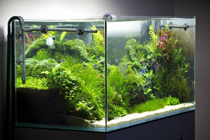 3200 besten aquarium bilder auf pinterest aquarien. Black Bedroom Furniture Sets. Home Design Ideas