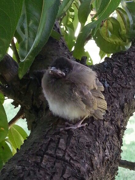 Baby Tiptol | Animals, Bird feathers, Birds