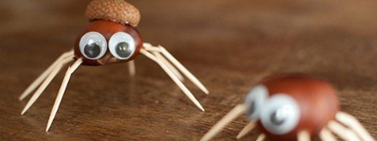 Kastanjespinnen, leuk om te maken met joekels van kastanjes. Te vinden in Nationaal Park de Hoge Veluwe. Check het artikel!