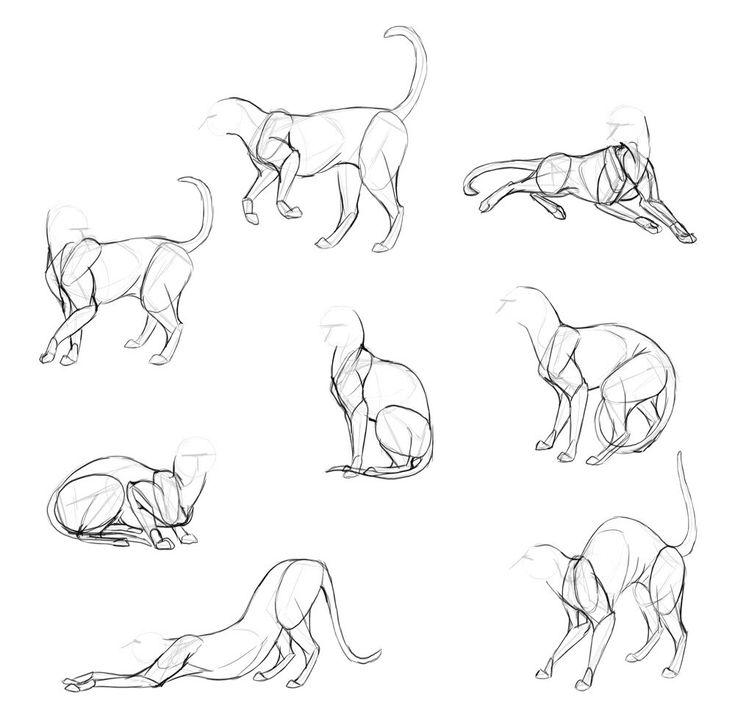 Картинки поз котов плей