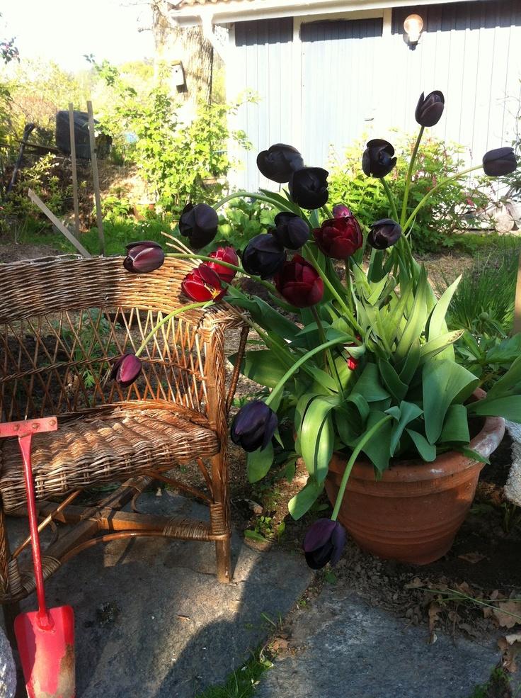 Bland rosor och garner: maj 2012