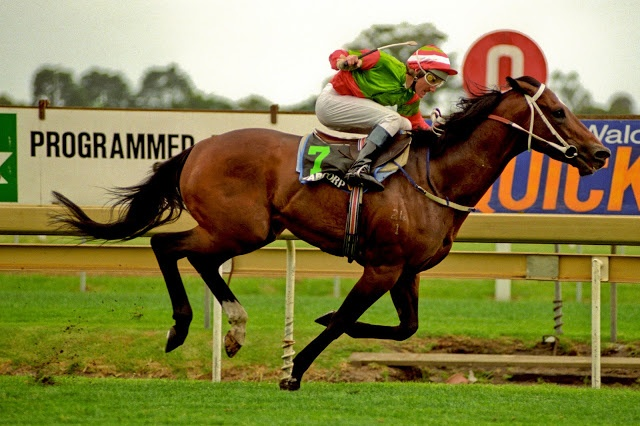 DANEWIN (Aus) B c 1991, Danehill (USA) - Cotehele House (GB), wins the 1995 Caulfield Stakes. Photo: Bronwen Healy Photography.