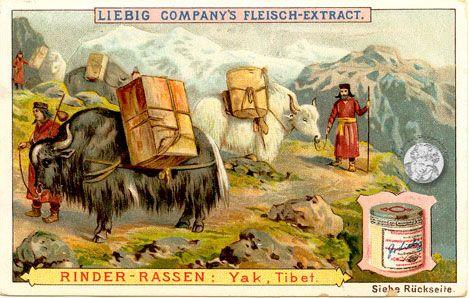 Liebig-Serie Nr. 377 Rinder-Rassen