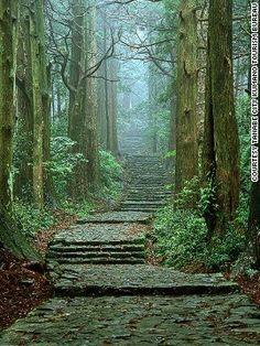 "WORLD HERITAGE 世界遺産 KUMANO-KODO ROAD 熊野古道 大門坂。ファンタジー映画「ロード・オブ・ザ・リング」の世界に入り込んだようDaimonzaka. I seemed to get into the world of the fantasy movie ""Lord of the Rings"""