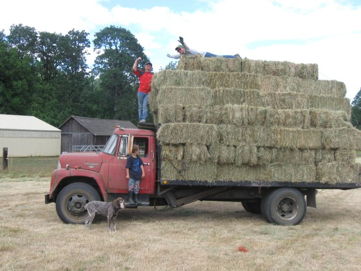 big load of hay with the old international truck life on