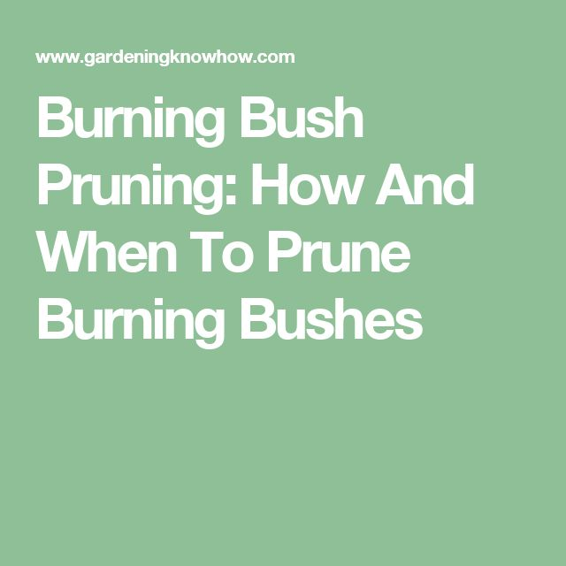 Burning Bush Pruning: How And When To Prune Burning Bushes                                                                                                                                                                                 More