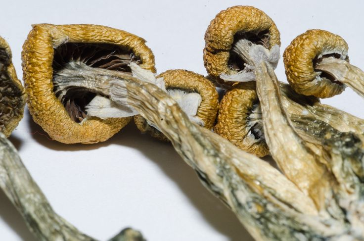Legal Psychedelics Could End The Antidepressant Industry