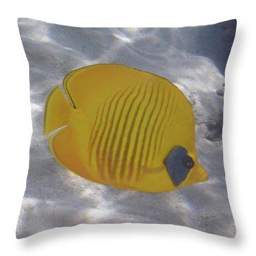 The blue-cheeked butterflyfish, Chaetodon semilarvatus, is a beautiful species of butterflyfish.This fish is also called the Masked Butterflyfish.   This time I got close to it and the silvery sand makes a nice background to the fish.  #pillow