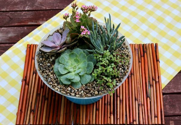 Blog Home     All     DIY Projects     Outdoor Living     Style Challenge     Videos  Succulent Garden