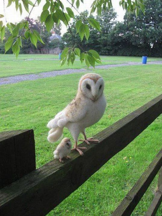 Mom and baby owl out for an early evening flight... precious.