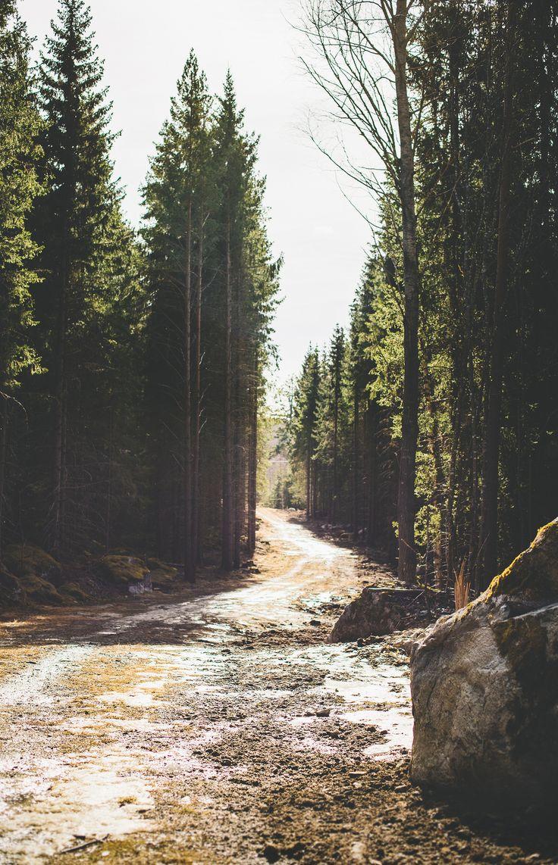 Skogspromenad - Evelinas Ekologiska