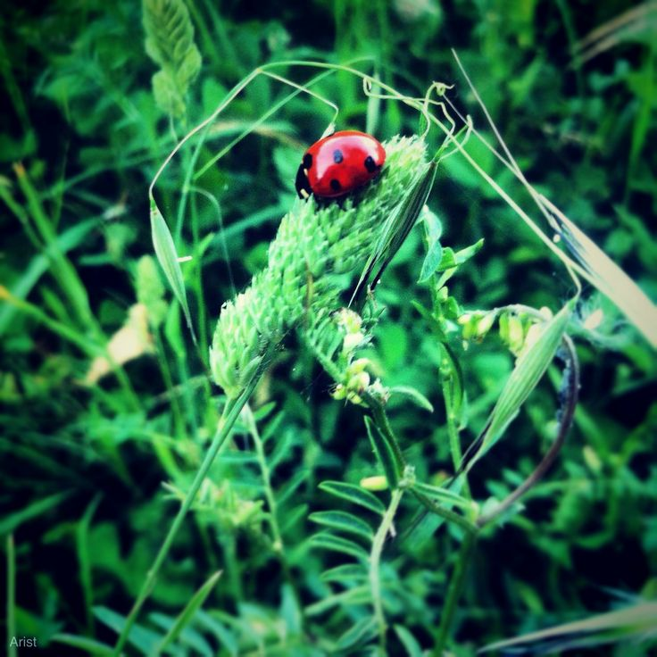Lady Bug is in the green !
