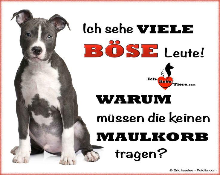 Ich sehe viele böse Leute! Warum müssen die keinen Maulkorp tragen? >> http://www.ich-liebe-tiere.com/ <<