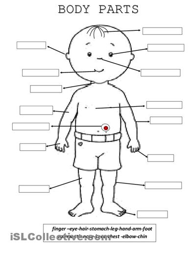 Body Parts worksheet - Free ESL printable worksheets made by teachers