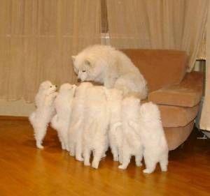 可愛すぎる!犬画像まとめ【100枚】 - NAVER まとめ