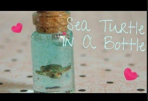 Turtle in a bottle