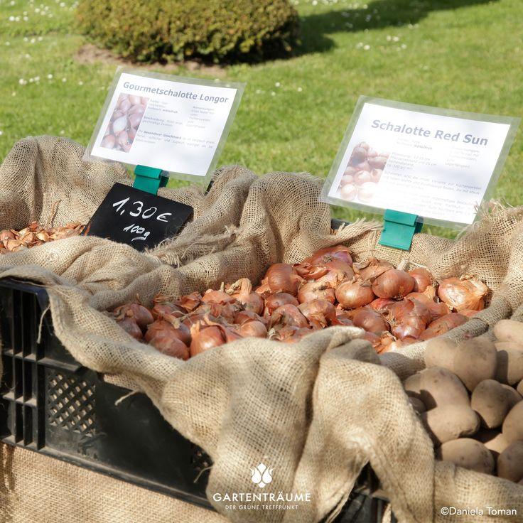 Zwiebelsorten auf der Gartenträume Hundisburg