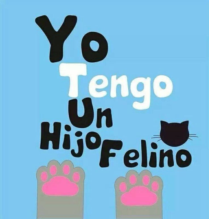 #frases #gatos