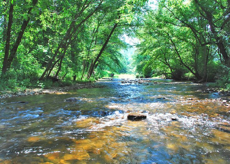 An Alabama water utility is suing North Georgia's carpet manufacturers, saying they polluted the Conasauga and Coosa rivers with toxic chemicals that have undermined the quality of drinking supplies and encouraged many customers to switch to bottled water.