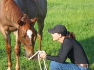 "Stephanie Krahl is Co-founder and CEO of the website Soulful Equine, Natural Horse Care Specialist, Writer, Teacher and Coach. In her own words, ""Through educating the human I can help many horses."""