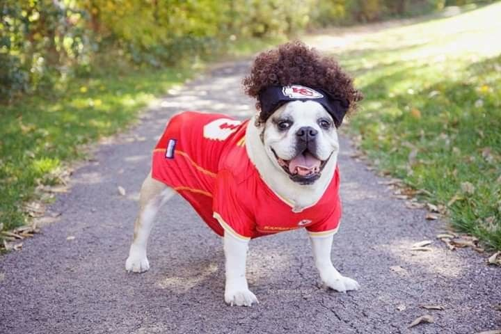 Introducing Pawtrick With Images Kansas City Chiefs Funny